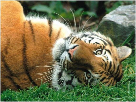 Animales hermosos y exóticos