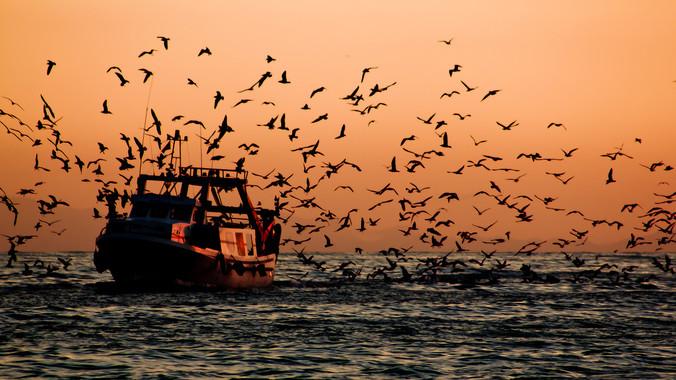 La política pesquera debe tener en cuenta el saber hacer de la pesca tradicional