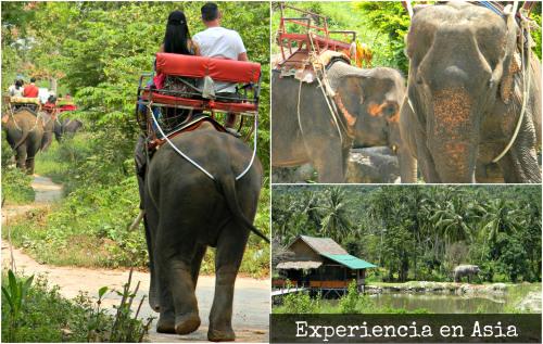 El uso de elefantes en el sector turístico