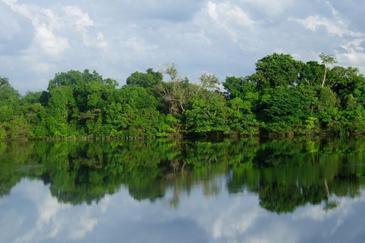 El 85% de las áreas tropicales protegidas han perdido cobertura forestal en los últimos 30 años