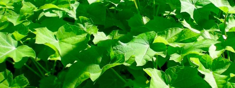 Bioenergía para comunidades rurales de Sinaloa