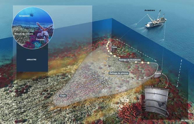 La pesca de arrastre intensiva provoca la desertificación biológica de los fondos marinos