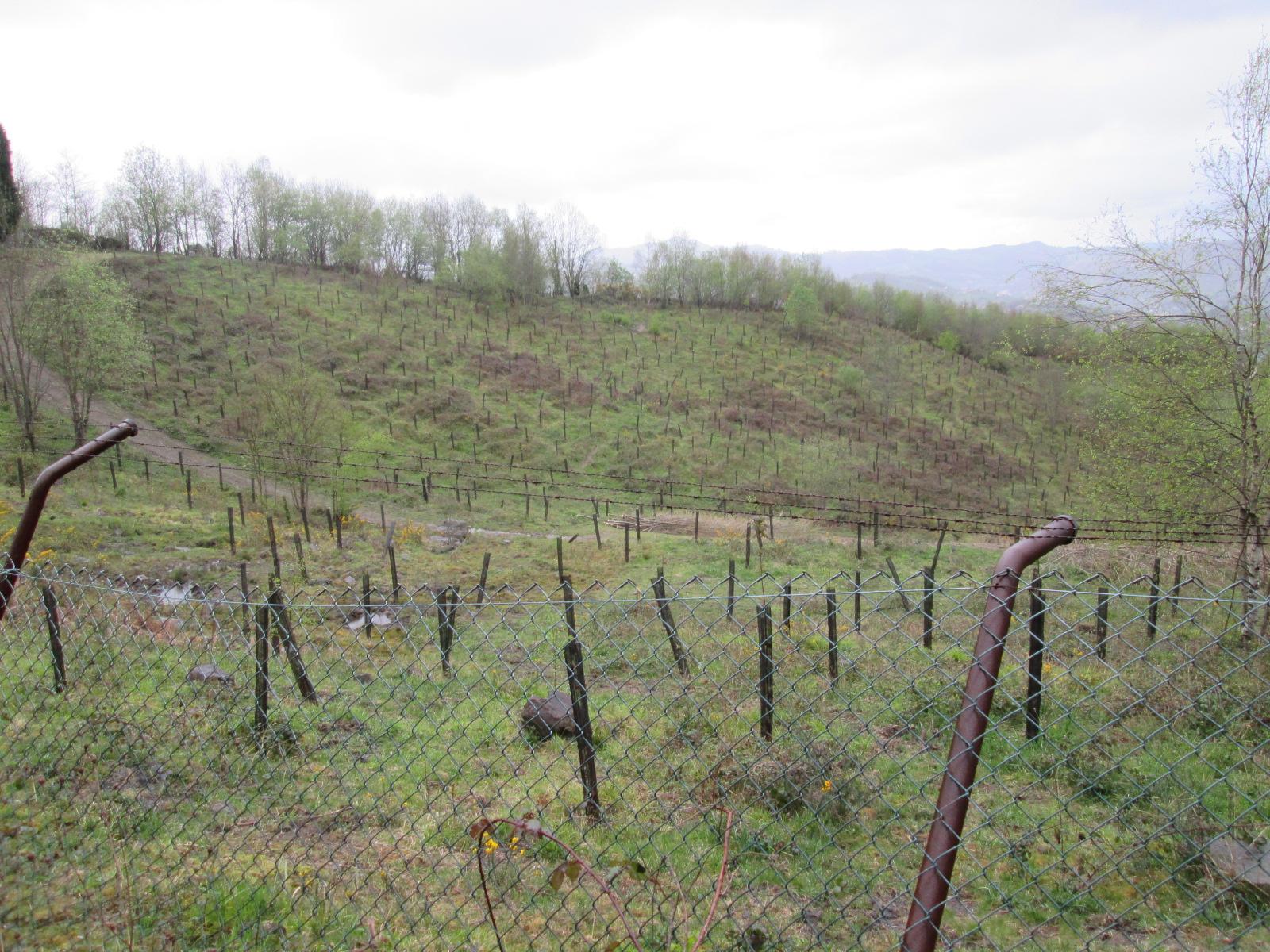 Asturias. Aprueban la central de biomasa de Hunosa sin responder a las alegaciones