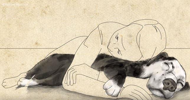 Un perro de refugio, un hombre con mala salud, y una historia increible