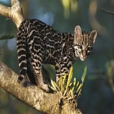 Costa Rica prohíbe la caza