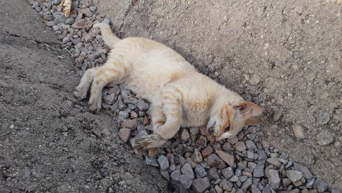 Liquidación masiva de gatos en Córdoba
