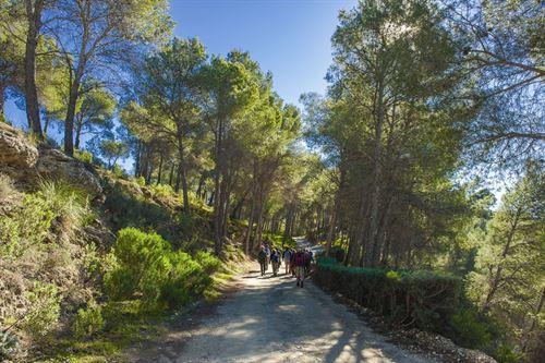 Las graves consecuencias de la desertificación y la gestión de los montes españoles