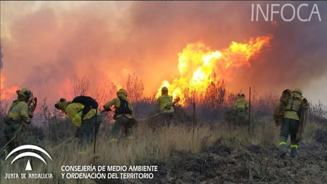 Ecologistas alertan de que los últimos incendios en Huelva y Sevilla afectan a espacios