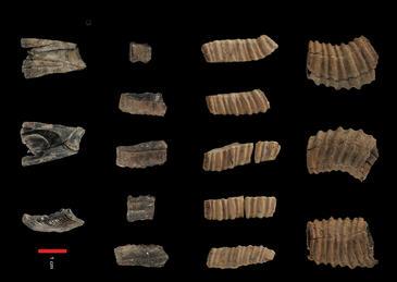 Los humanos comían ballena en Málaga hace 14.000 años