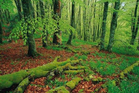 F rmate como experto en planificaci n y conservaci n de for Importancia economica ecologica y ambiental de los viveros forestales