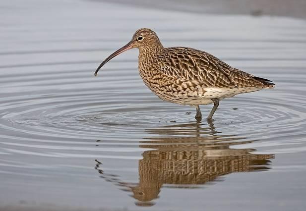 Más del 10% de las aves del planeta están amenazadas de extinción