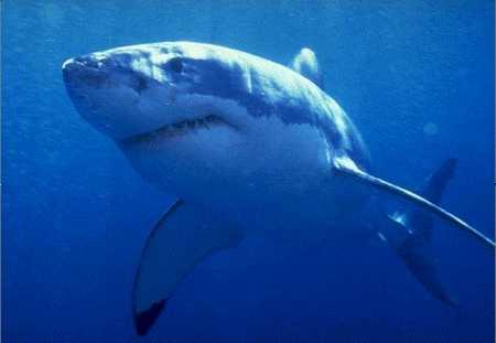 Los países del mediterráneo y la comisión europea retrasan la protección de tiburones y rayas en riesgo de desaparecer