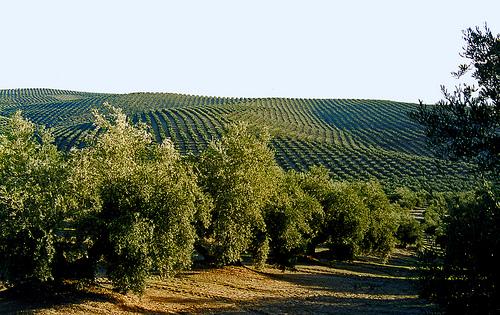 Cultivos sin fitosanitarios