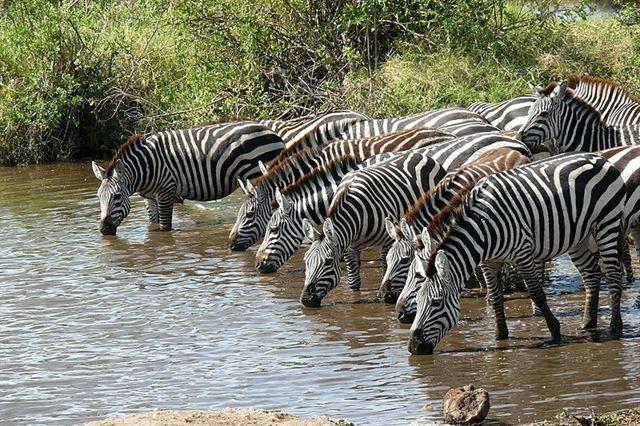 Entre Namibia y Botswana se produce la migración terrestre de vida salvaje más larga en Äfrica