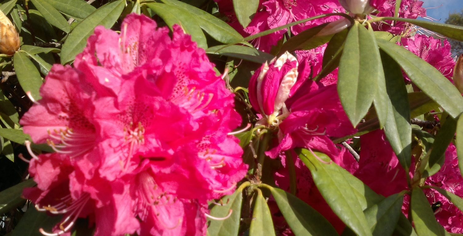 Sogama (Galicia) renueva el servicio de jardinería y mantenimiento ...