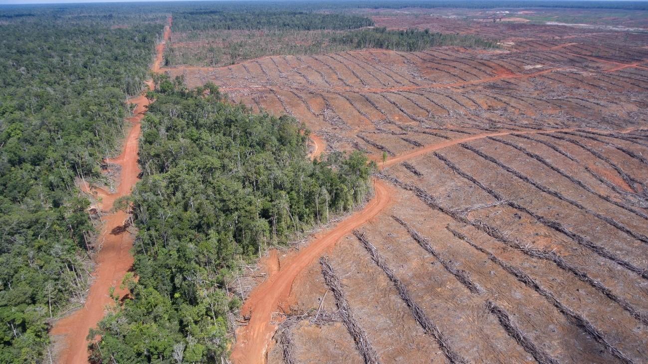 La UE vota por detener la deforestación del aceite de palma