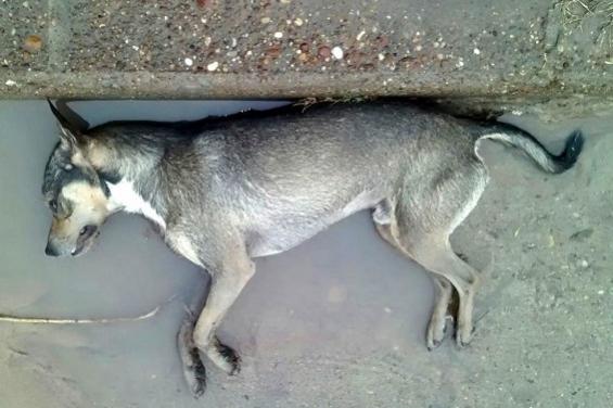 Argentina. Más de 200 perros fueron envenenados en La Plata