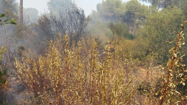 Extinguido el incendio de Villamanrique (Sevilla) tras quemar 12 hectáreas de matorral