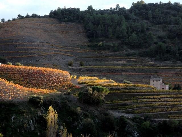 Un estudio constata que los cultivos ecológicos incrementan la biodiversidad de las viñas