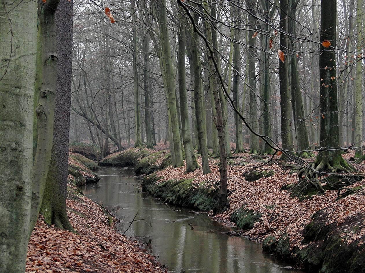 Los bosques 'frenan' el cambio climático
