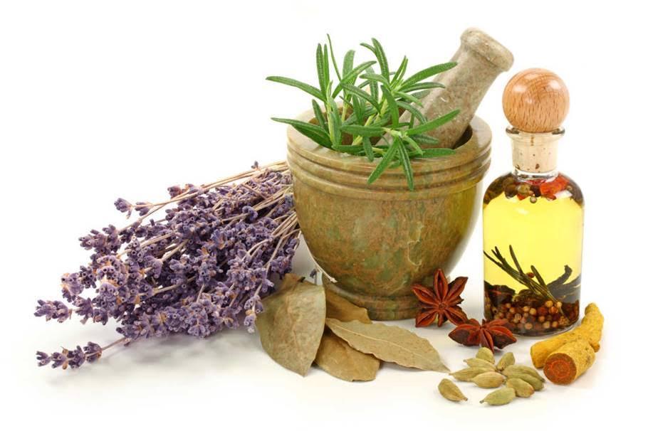 Te descubrimos toda la verdad sobre las plantas medicinales