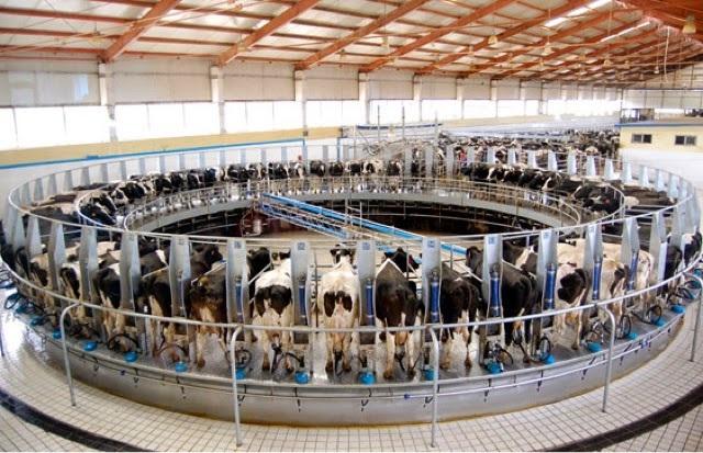 Conoce las graves consecuencias ambientales del consumo de carne