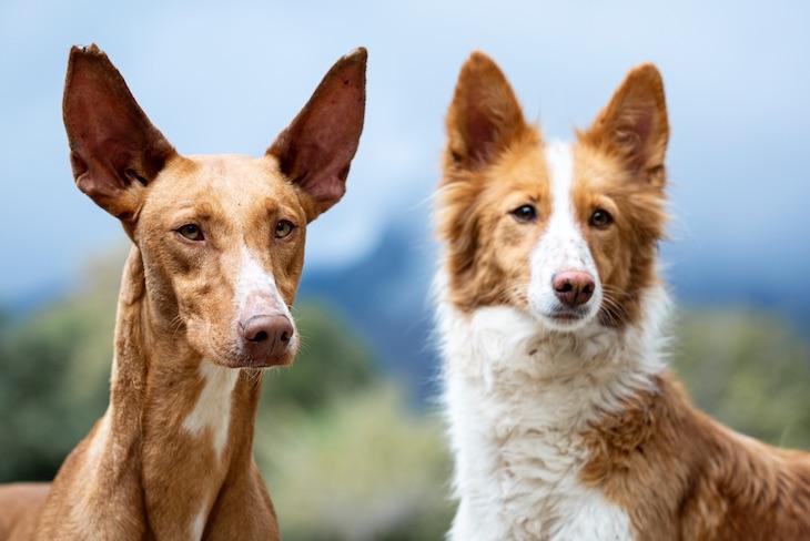 Un 'domingo de perros' en Madrid