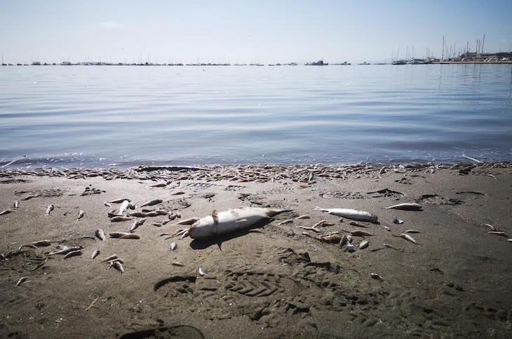 El Mar Menor sigue muriéndose