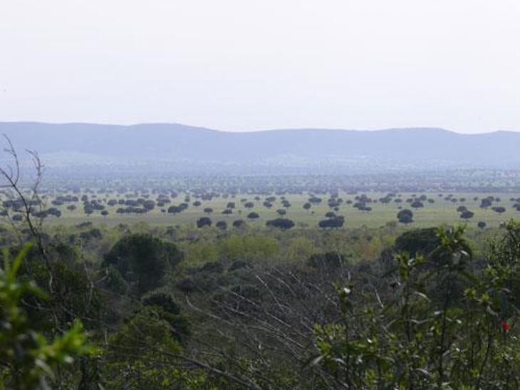 Cambio climático: la gestión de las dehesas debe adaptarse