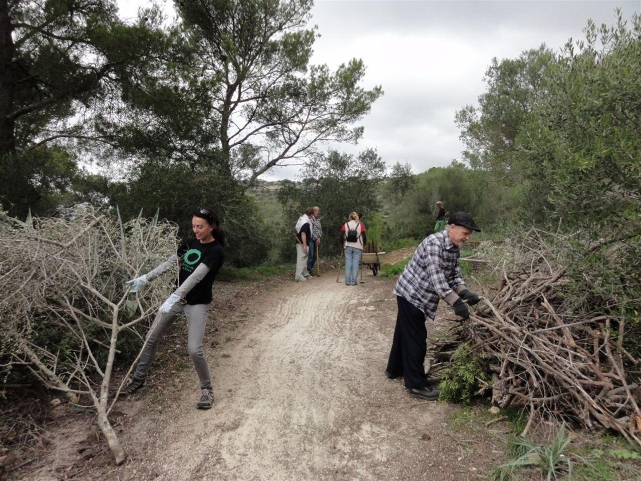 Para aprovechar la biomasa, Amics de la Terra realiza tareas de limpieza y reforestación en Son Honorat (Baleares)