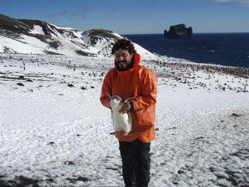 Deterioro 'imparable', garrapatas y contaminantes plásticos en la Antártida