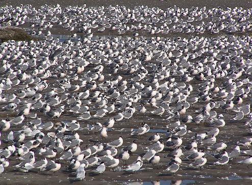 SEO/BirdLife te invita a descubrir el gran espectáculo de la migración de las aves en el Estrecho de Gibraltar