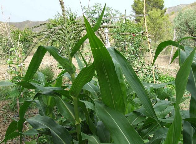 Remedios ecológicos para el jardín y la huerta