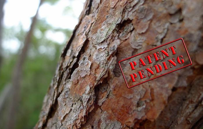 Árboles genéticamente modificados: ¿salvar especies o destruir el Medio Ambiente?