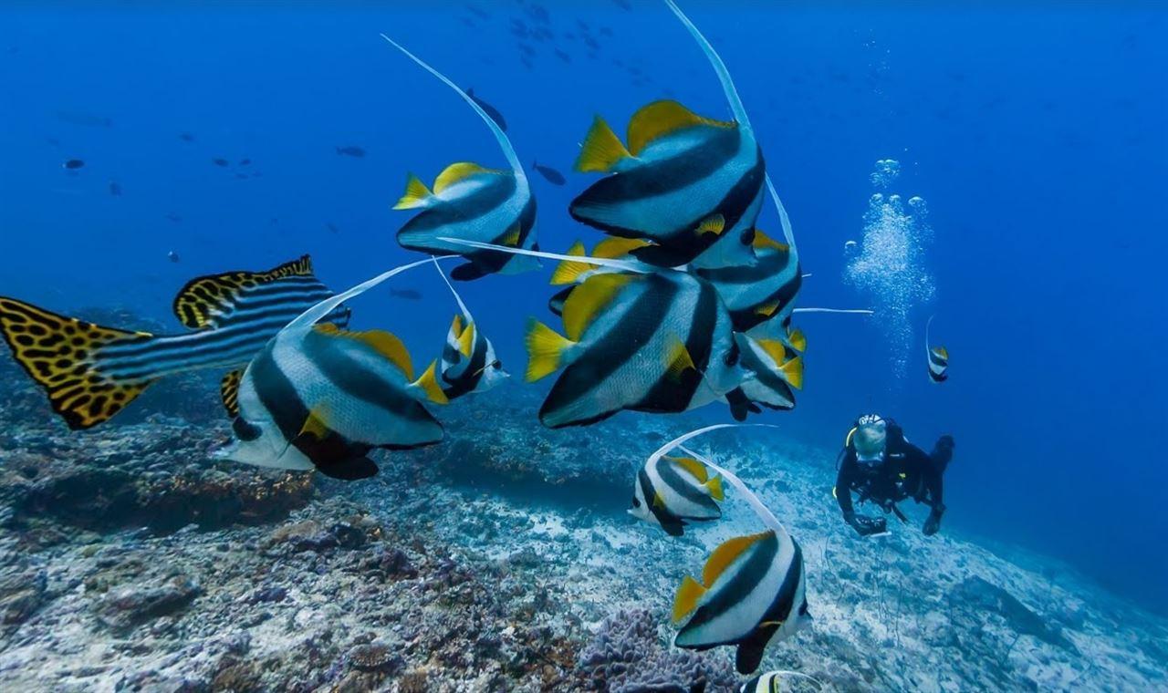 Las especies marinas del planeta de 'capa caída'