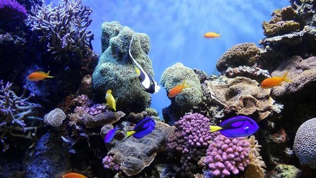 Los arrecifes de coral al 'limite'