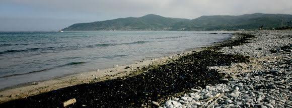 Galicia activará el Plan de Contingencia para evitar la contaminación litoral por los incendios