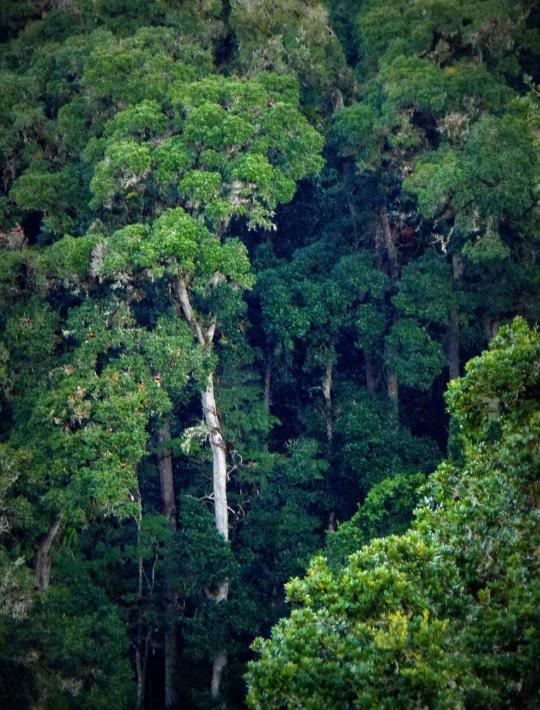 Un millón de dólares disponibles para proyectos de conservación