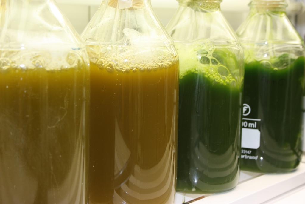 Proyecto Energreen, cultivo de microalgas más eficientes para producir biodiésel