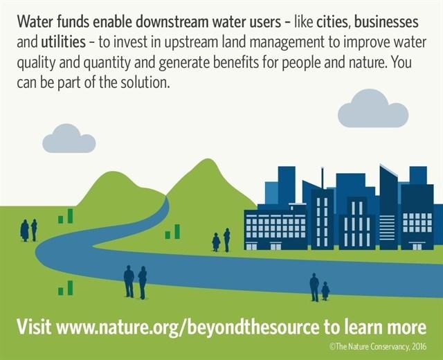 La protección forestal mejoraría el 80% de las ciudades