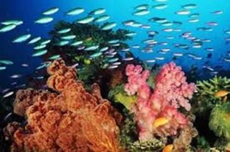 Roquetas quiere un parque submarino de arrecifes artificiales con barcos hundidos