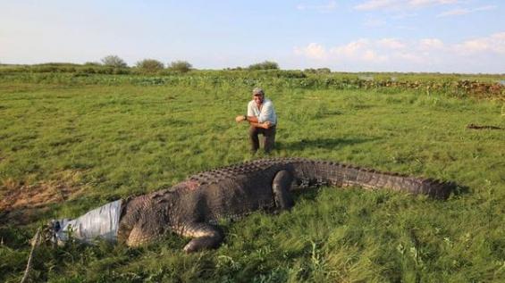 Australia: La foto de un cocodrilo gigante generó un debate viral en el país