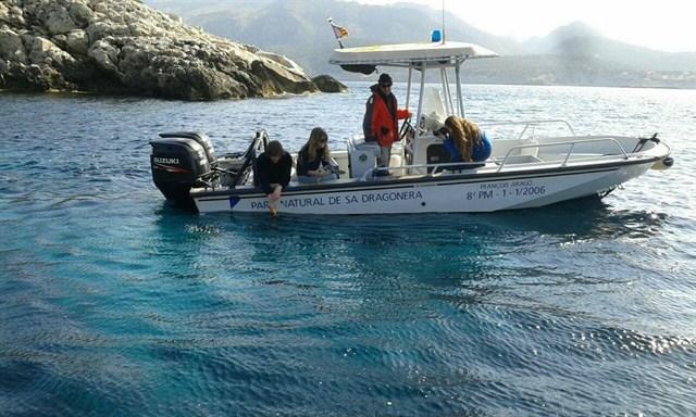 Liberan en Sa Dragonera a dos tortugas marinas rescatadas