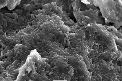 Aprovechar la actividad eléctrica de las bacterias