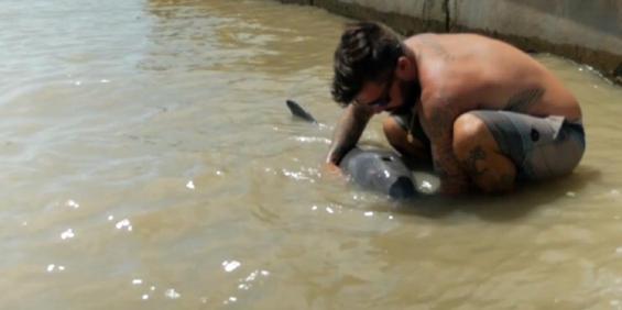 Florida: Tras el paso de Irma, un delfín quedó varado en el jardín de una casa