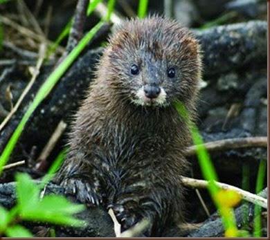Navarra alberga al menos el 15% de las especies españolas