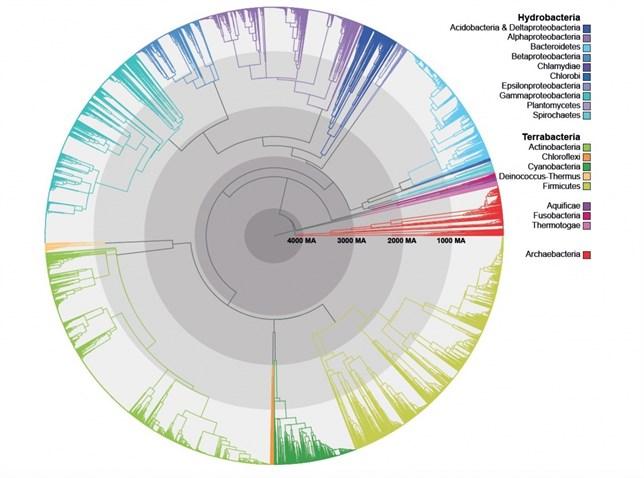El árbol de la vida de las bacterias no es tan diferente al nuestro