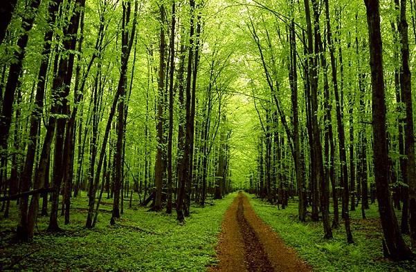 Los bosques españoles siguen acumulando CO2 a pesar del cambio climático