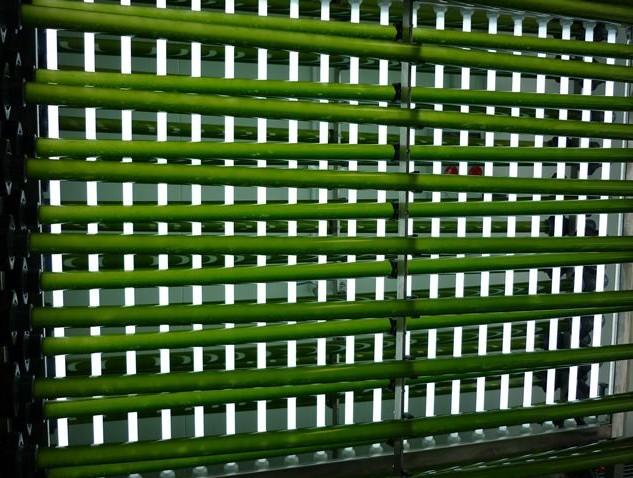 Mircoalgas alimentadas con residuos de plantas de biogás