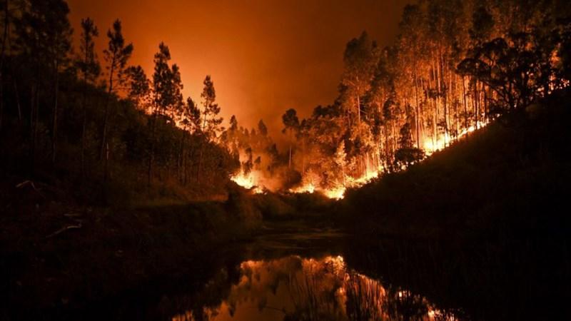 ¿Por qué hay Super incendios forestales en todo el planeta?